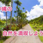 実際に行ってみてオススメの沖縄の自然が満喫できる観光スポット14